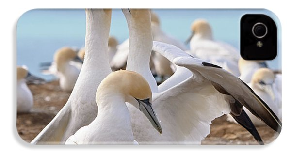 Gannets IPhone 4s Case by Werner Padarin