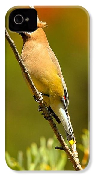 Glacier Cedar Waxwing IPhone 4s Case by Adam Jewell