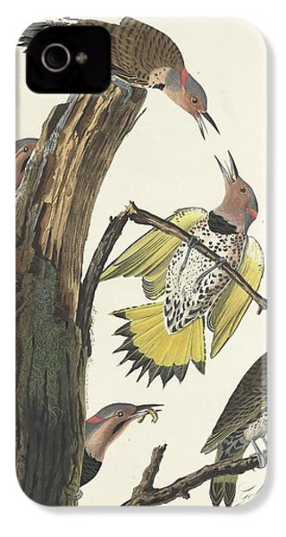 Gold-winged Woodpecker IPhone 4s Case by Dreyer Wildlife Print Collections