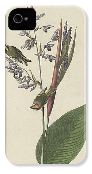 Golden-crested Wren IPhone 4s Case by Rob Dreyer
