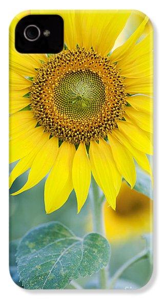 Golden Sunflower IPhone 4s Case