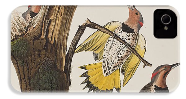 Golden-winged Woodpecker IPhone 4s Case by John James Audubon