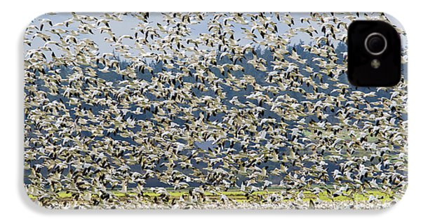 Goose Storm IPhone 4s Case by Mike Dawson
