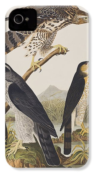 Goshawk And Stanley Hawk IPhone 4s Case by John James Audubon