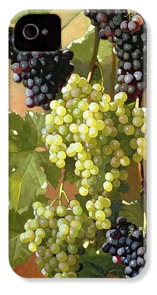Grapes IPhone 4s Case by Edward Chalmers Leavitt