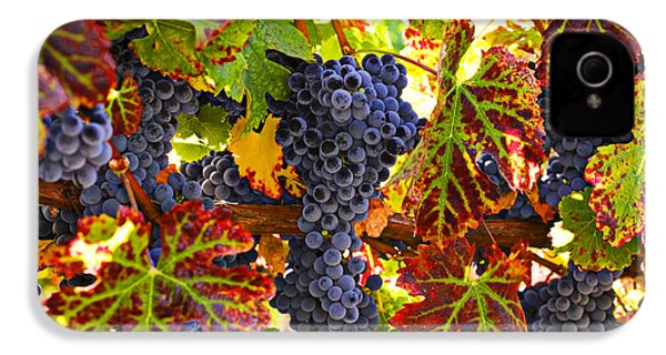 Grapes On Vine In Vineyards IPhone 4s Case by Garry Gay