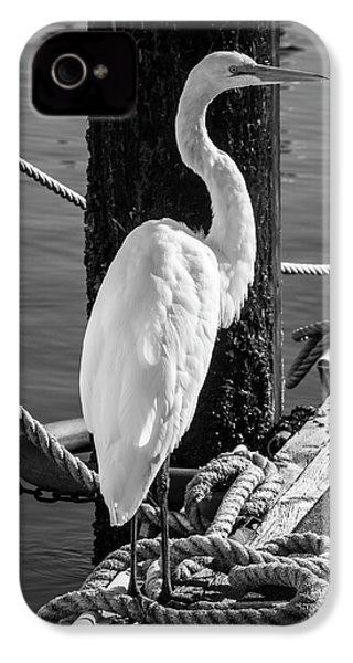 Great White Heron In Black And White IPhone 4s Case by Garry Gay