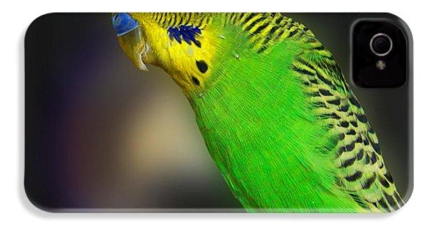 Green Parakeet Portrait IPhone 4s Case by Jai Johnson