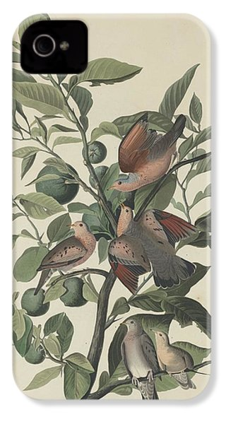 Ground Dove IPhone 4s Case by Rob Dreyer