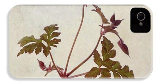Herb Robert - Wild Geranium  #flower IPhone 4s Case by John Edwards