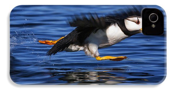 Horned Puffin  Fratercula Corniculata IPhone 4s Case by Marion Owen