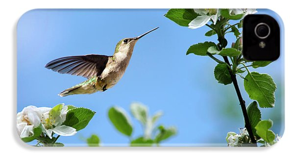 Hummingbird Springtime IPhone 4s Case by Christina Rollo