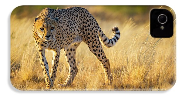 Hunting Cheetah IPhone 4s Case by Inge Johnsson