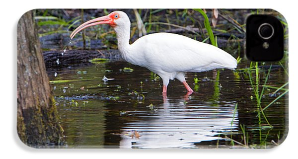 Ibis Drink IPhone 4s Case by Mike Dawson