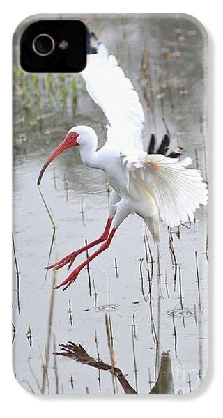 Ibis Soft Water Landing IPhone 4s Case by Carol Groenen