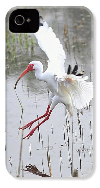 Ibis Soft Water Landing IPhone 4s Case by Carol Groenen