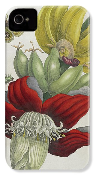 Inflorescence Of Banana, 1705 IPhone 4s Case by Maria Sibylla Graff Merian