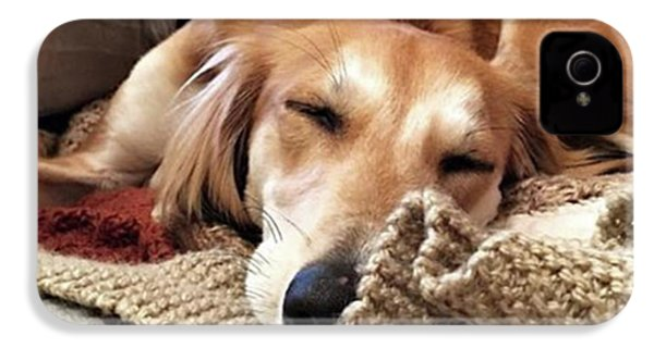 It's Been A Hard Day...  #saluki IPhone 4s Case by John Edwards