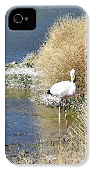 Juvenile Flamingo No. 64 IPhone 4s Case by Sandy Taylor