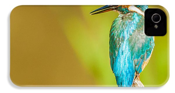 Kingfisher IPhone 4s Case by Paul Neville