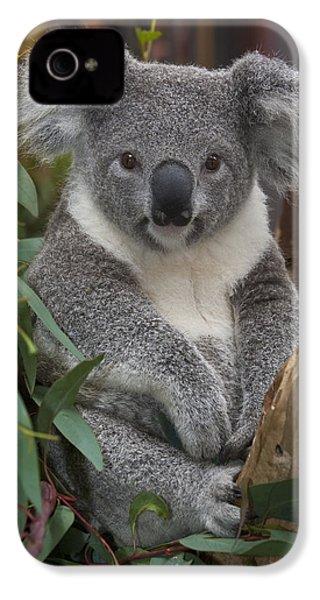 Koala Phascolarctos Cinereus IPhone 4s Case by Zssd