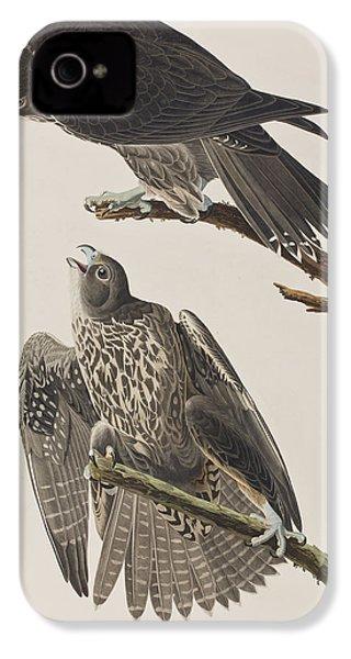 Labrador Falcon IPhone 4s Case by John James Audubon