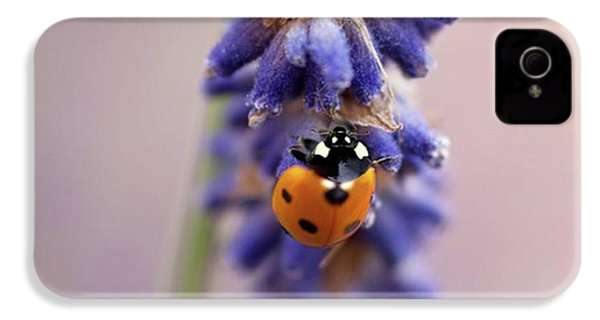 Ladybird On Norfolk Lavender  #norfolk IPhone 4s Case by John Edwards
