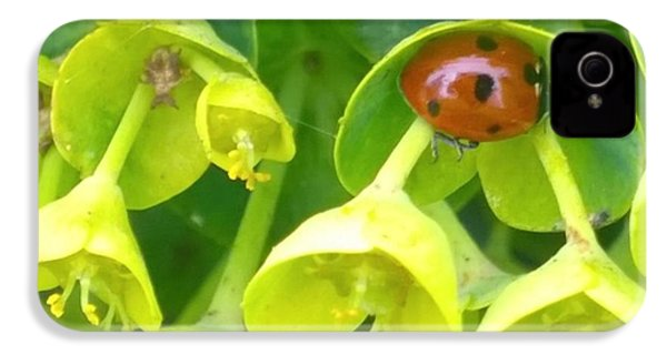 #ladybug Found Some Shelter From The IPhone 4s Case by Shari Warren