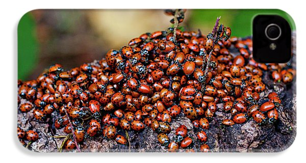 Ladybugs On Branch IPhone 4s Case by Garry Gay