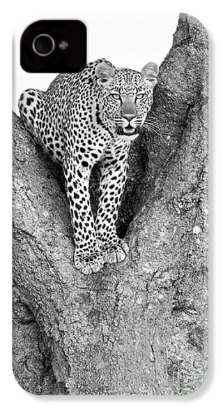 Leopard In A Tree IPhone 4s Case by Richard Garvey-Williams