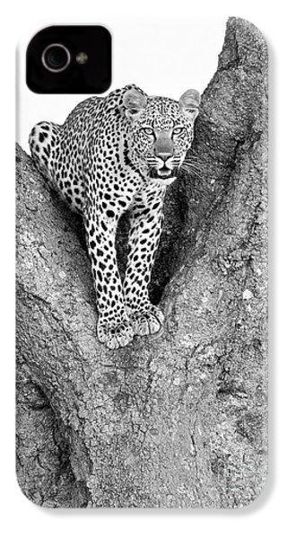 Leopard In A Tree IPhone 4s Case