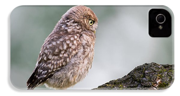Little Owl Chick Practising Hunting Skills IPhone 4s Case by Roeselien Raimond
