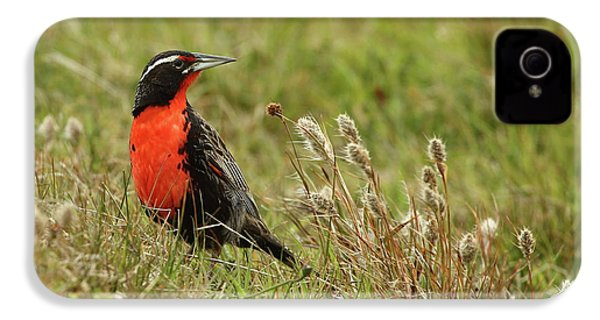 Long-tailed Meadowlark IPhone 4s Case by Bruce J Robinson