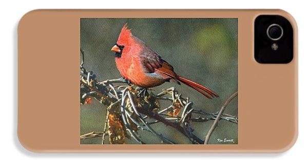 Male Cardinal IPhone 4s Case