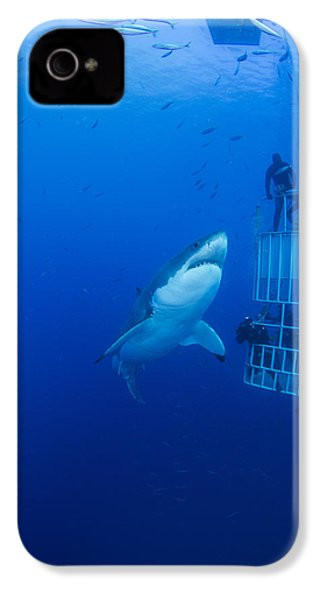 Male Great White With Cage, Guadalupe IPhone 4s Case by Todd Winner