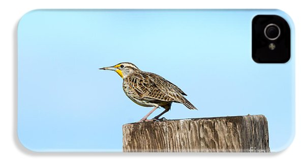 Meadowlark Roost IPhone 4s Case by Mike Dawson