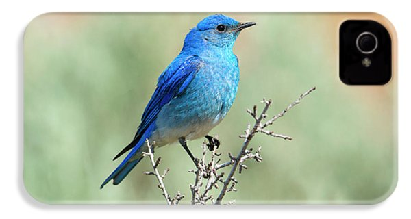 Mountain Bluebird Beauty IPhone 4s Case by Mike Dawson