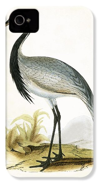 Numidian Crane IPhone 4s Case by English School