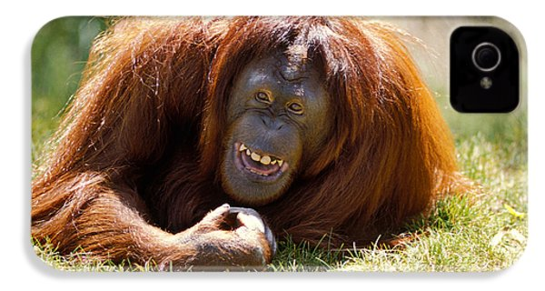 Orangutan In The Grass IPhone 4s Case by Garry Gay