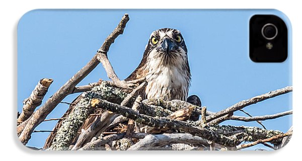 Osprey Eyes IPhone 4s Case