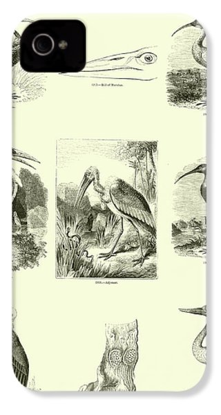 Page From The Pictorial Museum Of Animated Nature  IPhone 4s Case by English School
