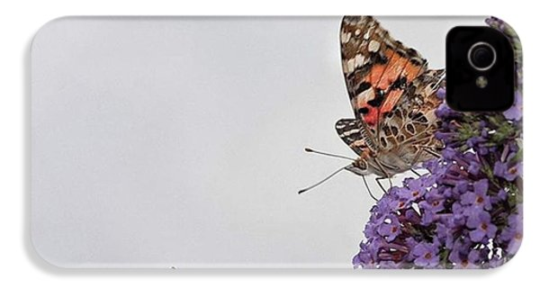 Painted Lady (vanessa Cardui) IPhone 4s Case by John Edwards