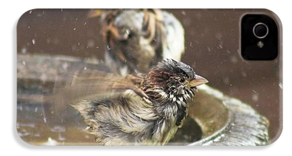 Pass The Towel Please: A House Sparrow IPhone 4s Case by John Edwards
