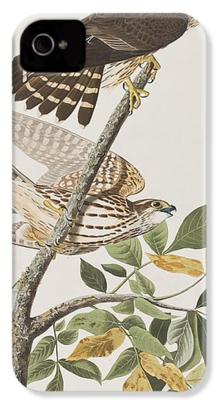 Pigeon Hawk IPhone 4s Case by John James Audubon