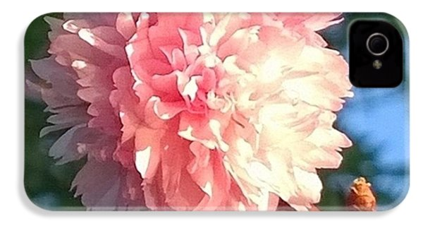 Pink Flower Bloom In Sunset. #flowers IPhone 4s Case