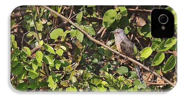 Plaintive Cuckoo IPhone 4s Case by Neil Bowman/FLPA