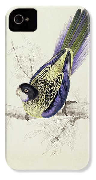 Platycercus Brownii, Or Browns Parakeet IPhone 4s Case by Edward Lear