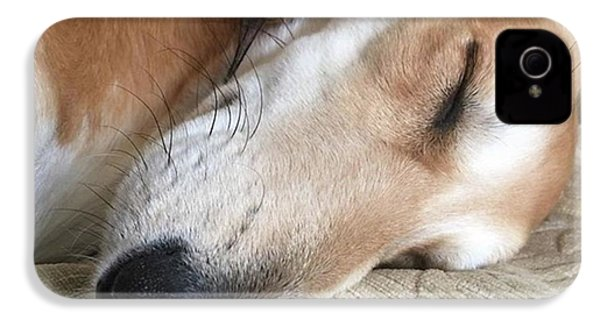 Please Be Quiet. Saluki IPhone 4s Case by John Edwards