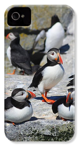Puffins At Rest IPhone 4s Case