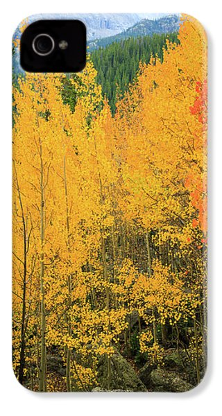 IPhone 4s Case featuring the photograph Pure Gold by David Chandler
